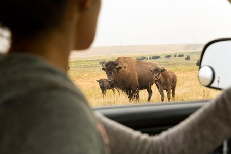 Kendall Edmo, Iinii Initiative Project Coordinator for the Blackfeet Tribe at the Bison Reserve in Browning, Montana.